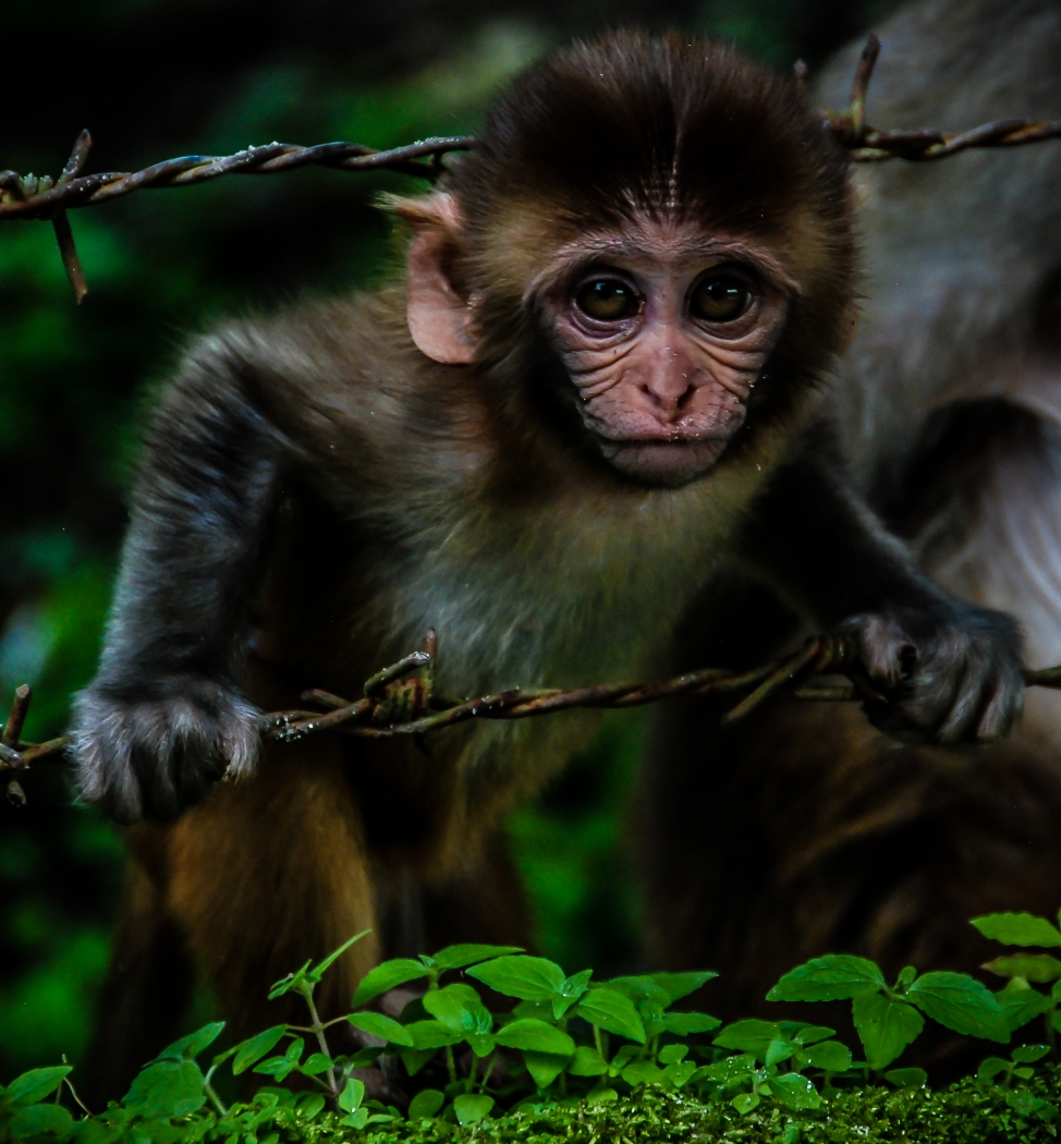 Monkey Business_Les McCulloch
