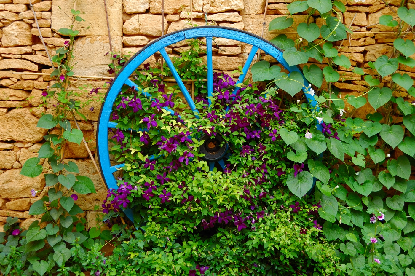 Wagon Wheel and Clematis Craig Harriss
