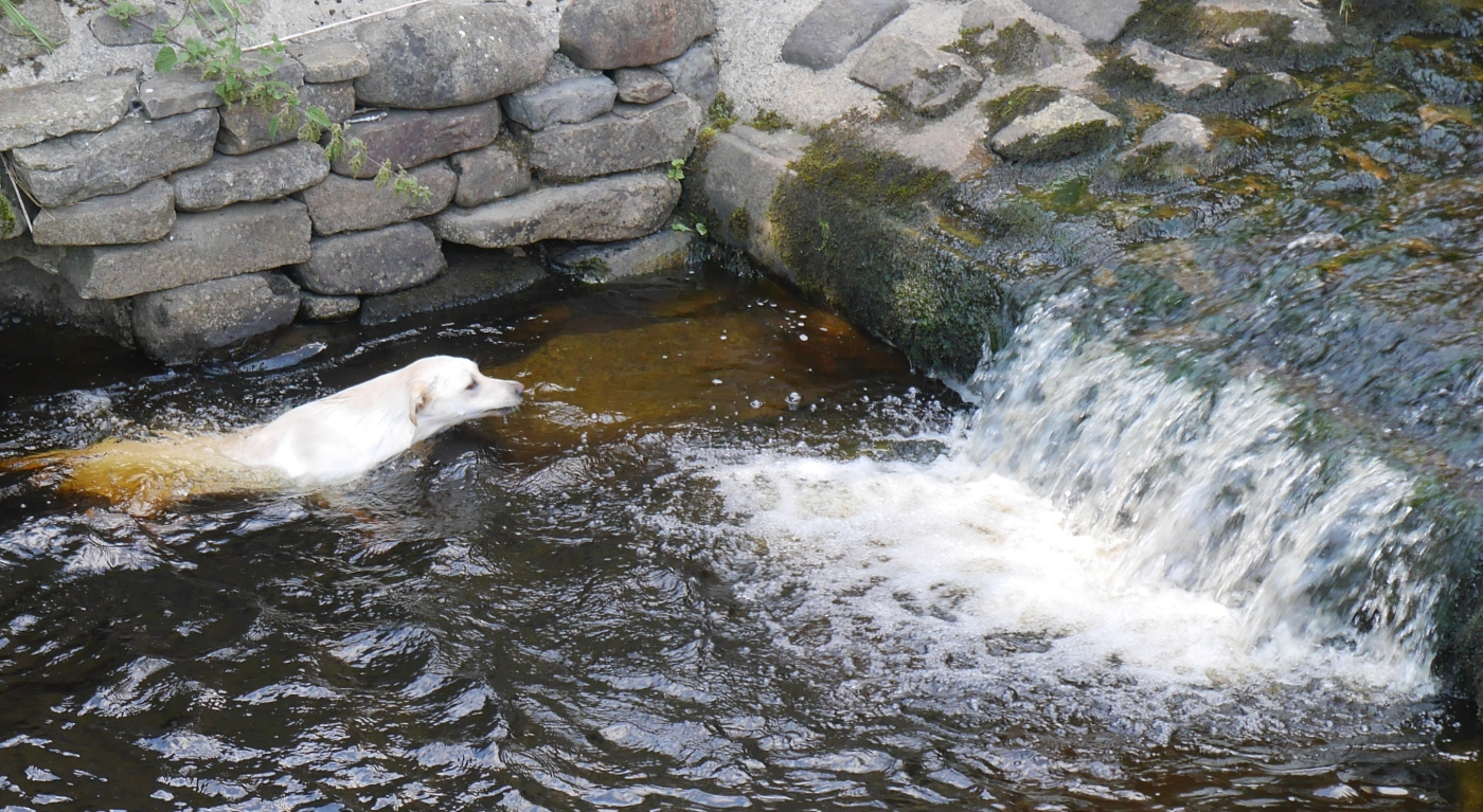 Dog and Water Hilary Aspinwall
